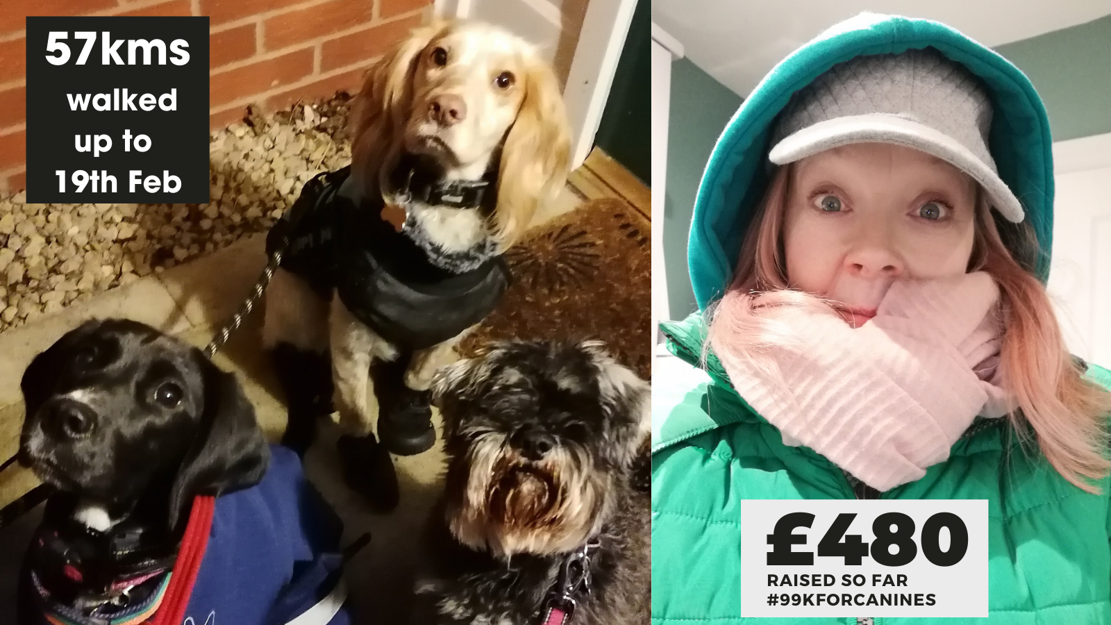 Walking 99k in February to raise funds for the Dogs Trust