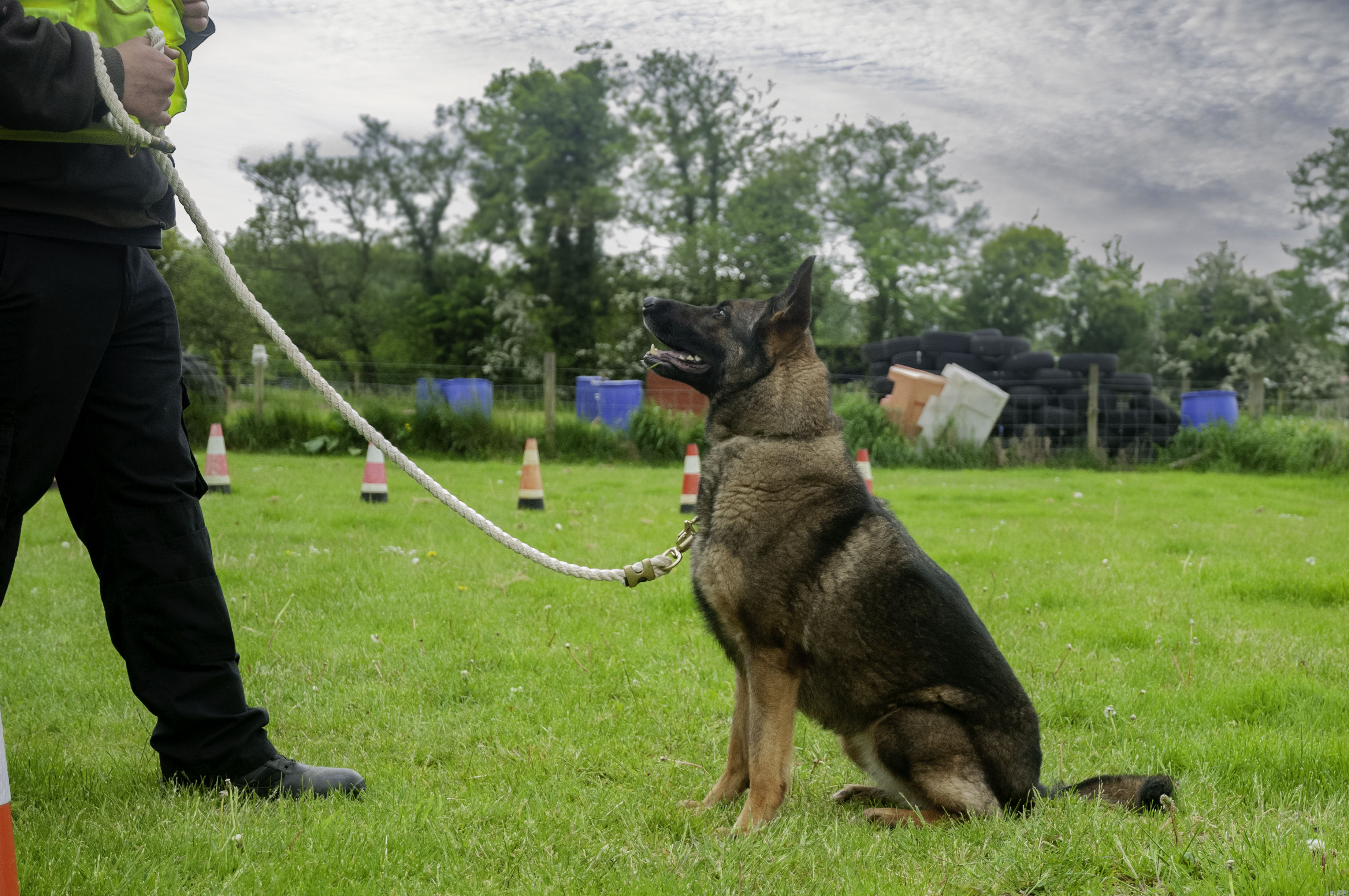 Re-Opening Our K9 Training Grounds After the Covid-19 Lockdowns